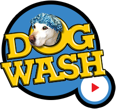 Everything comes out better at the glen burnie car wash glen our self serve dog wash lets you make grooming a family event view our amenities and pricing solutioingenieria Choice Image